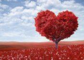 infarct miocardiac